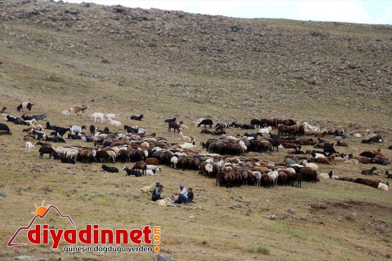 AĞRI olan koyun devlet ziyaret sahibi Ağrı Varol, Valisi desteğiyle çiftçileri etti - yaylada 3