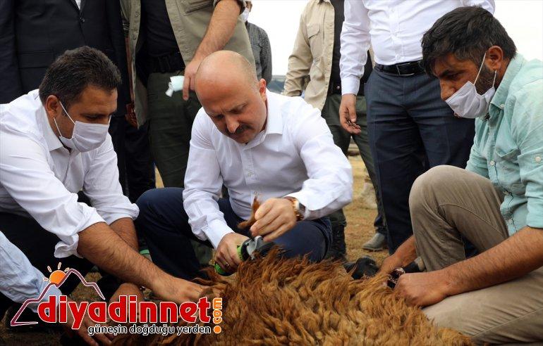 sahibi AĞRI Varol, ziyaret desteğiyle koyun olan çiftçileri yaylada - Valisi Ağrı devlet etti 9