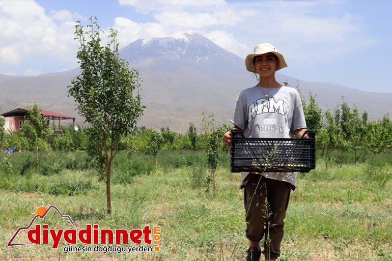 çorak eteklerindeki vahaya araziyi ağaçlarıyla Dağı dönüştürdü Ağrı meyve 9