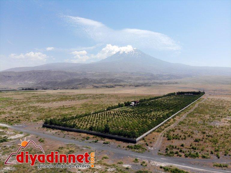 dönüştürdü meyve ağaçlarıyla araziyi çorak vahaya Dağı eteklerindeki Ağrı 10