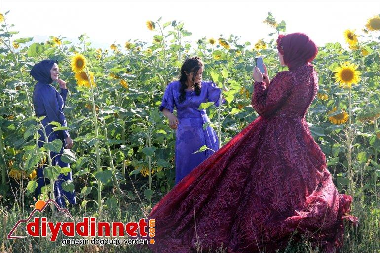 gelin ayçiçeği fotoğraflarına Ağrı'daki ve katıyor tarlaları damatların renk 8