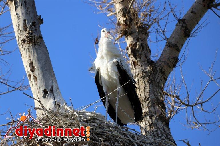 Kanat uçma göç leylekler, yavru - hazırlanıyor AĞRI denemeleri yolculuğuna yapan çırparak 11