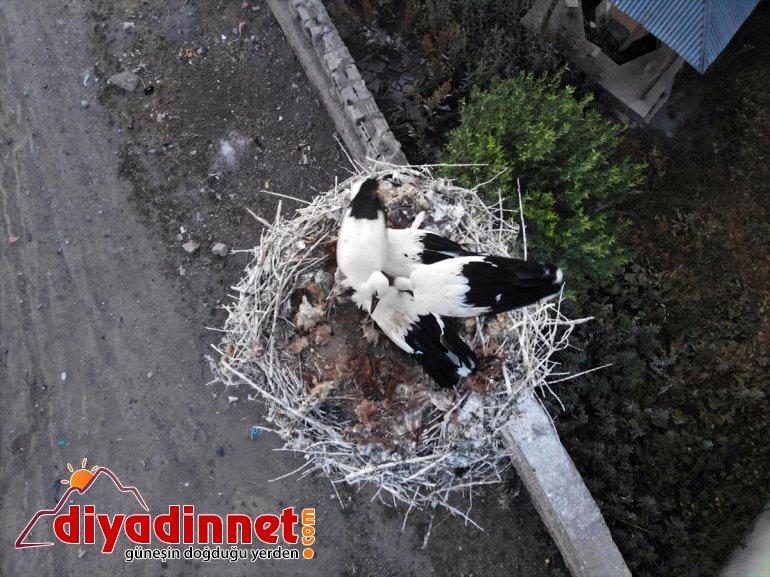 leylekler, yavru denemeleri çırparak uçma AĞRI göç yapan hazırlanıyor Kanat - yolculuğuna 7