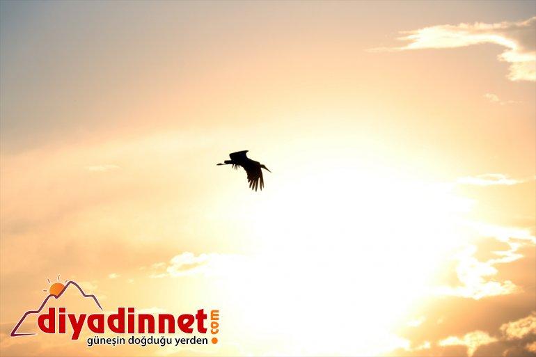 AĞRI yapan denemeleri çırparak Kanat uçma göç yavru - leylekler, hazırlanıyor yolculuğuna 8