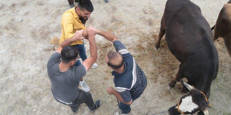 Erzurum, Erzincan, Ağrı ve Kars'ta canlı hayvan pazarında hareketlilik arttı