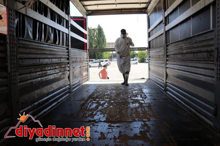 Hayvancılık merkezi Ağrı dan batı illerine kurbanlık sevkiyatı hız kazandı2
