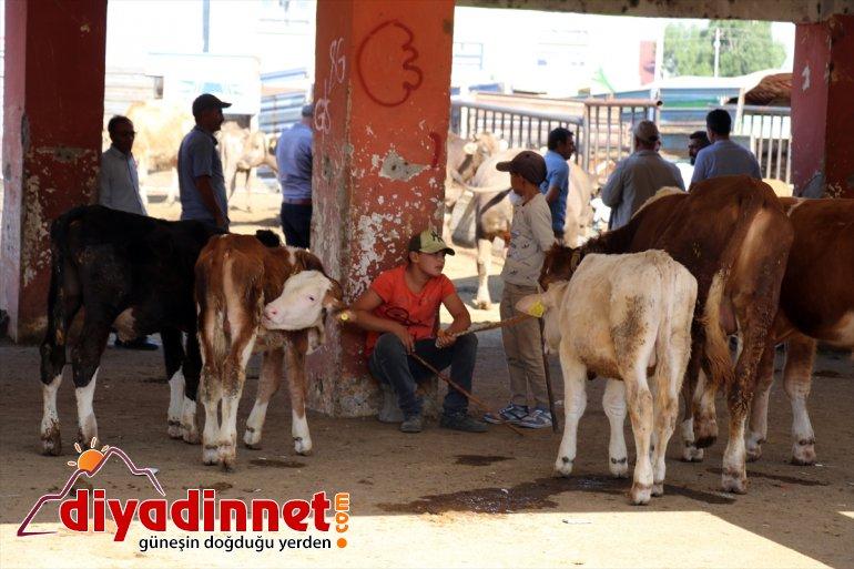 Hayvancılık merkezi Ağrı dan batı illerine kurbanlık sevkiyatı hız kazandı4