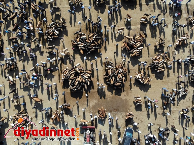 Türkiye nin hayvancılık merkezlerinden olan Ağrı daki pazarda Kurban Bayramı yoğunluğu yaşanıyor11