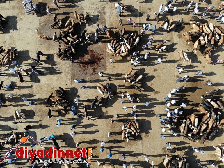 Türkiye nin hayvancılık merkezlerinden olan Ağrı daki pazarda Kurban Bayramı yoğunluğu yaşanıyor13