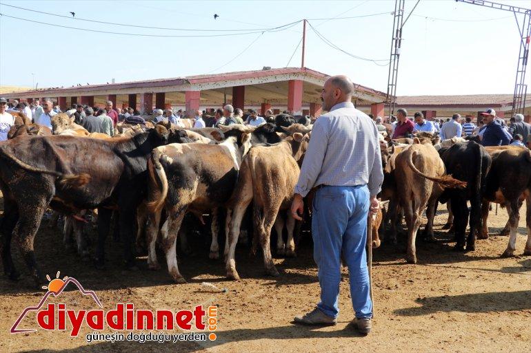 Türkiye nin hayvancılık merkezlerinden olan Ağrı daki pazarda Kurban Bayramı yoğunluğu yaşanıyor16