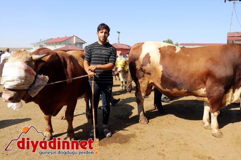 Türkiye nin hayvancılık merkezlerinden olan Ağrı daki pazarda Kurban Bayramı yoğunluğu yaşanıyor7