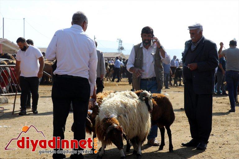 Türkiye nin hayvancılık merkezlerinden olan Ağrı daki pazarda Kurban Bayramı yoğunluğu yaşanıyor9