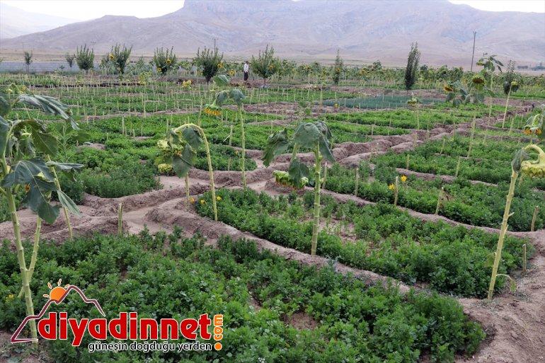 tonlarca sebze üretiyorlar meyve rağmen kurdukları yetişmez bostanda AĞRI arpa Burada bile - denilmesine 24