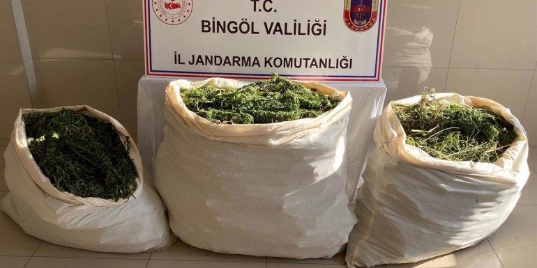 Bingöl'de 174 kilogram esrar ele geçirildi