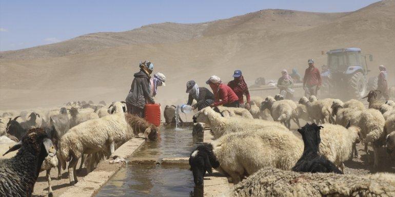 Van'da çiftçiler yayladaki hayvanlarının suya kavuşmasını halay çekerek kutladı