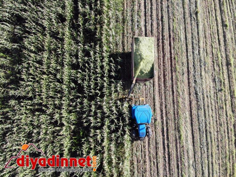 silajlık Çiftçiler - destekli devlet AĞRI başladı mısırın hasadına 19