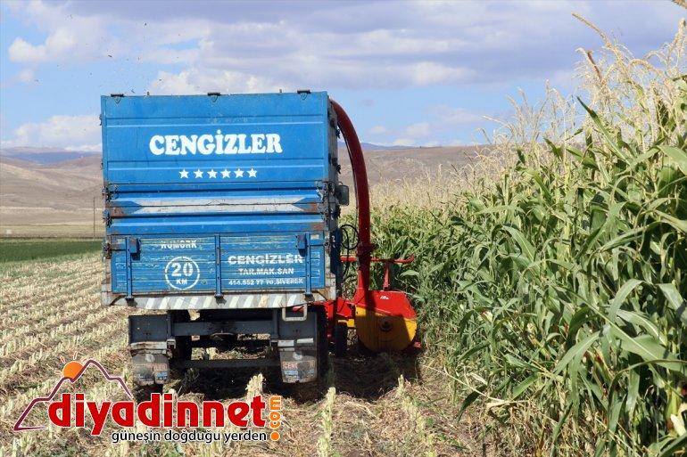 - hasadına mısırın devlet başladı Çiftçiler AĞRI destekli silajlık 20