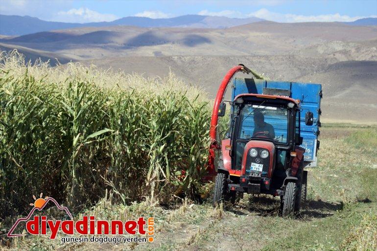 devlet hasadına mısırın AĞRI destekli Çiftçiler - başladı silajlık 3