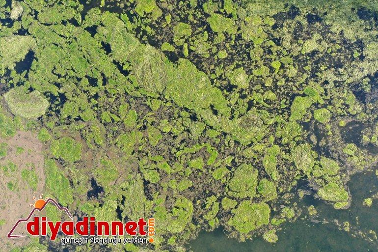 Milli kaplandı Ağrı Parkı'nın yosunla Dağı bölümleri bazı 4