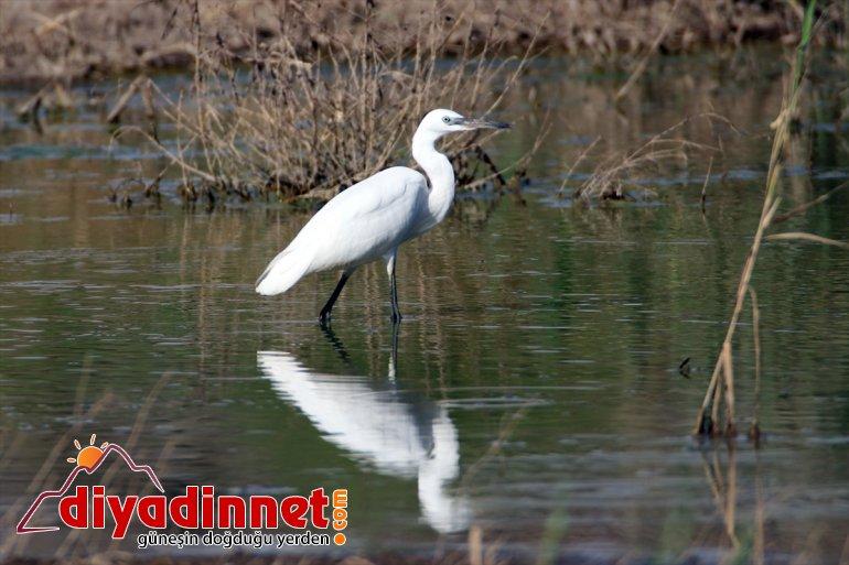 popülasyonuyla - dikkati Ağrı çekiyor Milli Dağı kuş Parkı, IĞDIR 12
